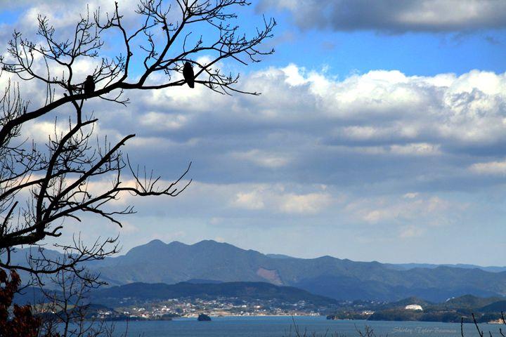 Birds overlooking the Pacific Ocean - Shirleypix Art & Photography