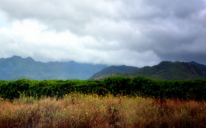 Kauai Landscape - Shirleypix Art & Photography