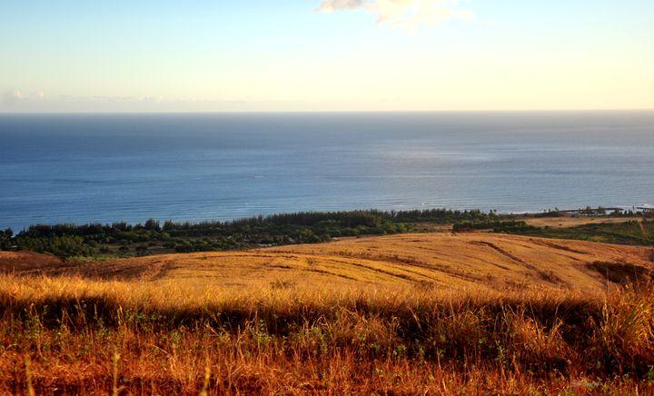 Aloha Grass - Shirleypix Art & Photography