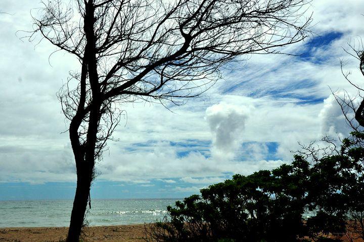 Tree Breeze - Shirleypix Art & Photography