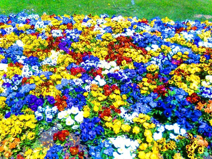 086 Flowers - Mardy Bautiful Pictures