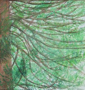 Redwood in my back yard