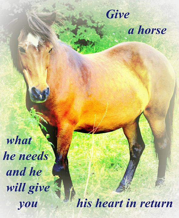 Give a horse - Hilde Widerberg ART