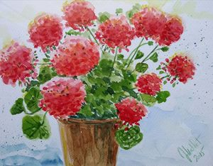 Geranium plant in a pot, 20x26cm