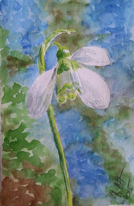 Looking up at a snowdrop - Jovanka Papathanasiou
