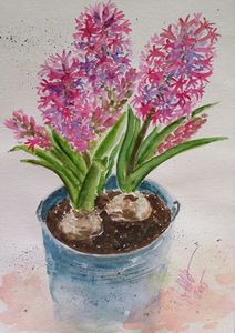 Hyacinths in a blue bucket