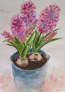 Hyacinths in a blue bucket - Jovanka Papathanasiou