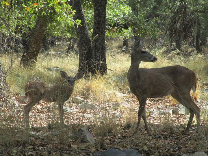 Deer momma  and Baby - HEALING ART ROXANNE GIBSON