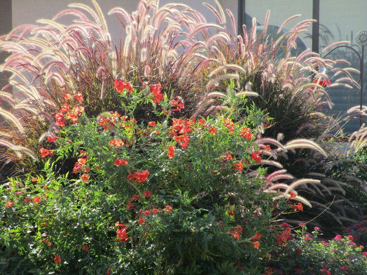Swaying fall flowers - HEALING ART ROXANNE GIBSON