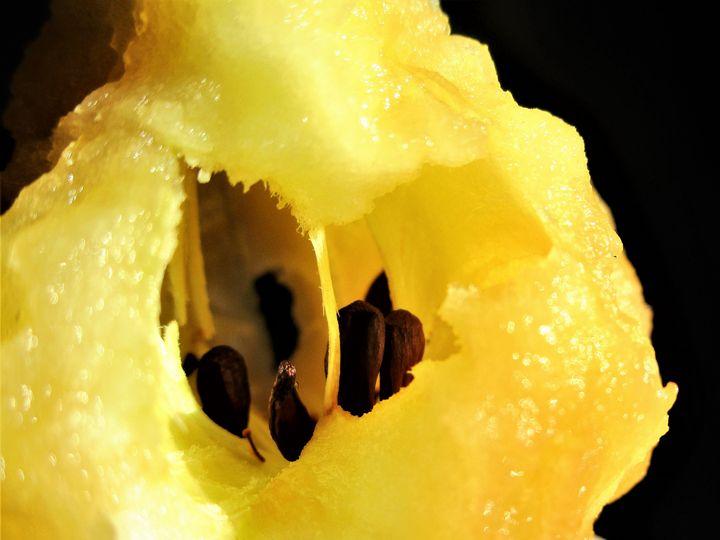 Apple Core Seeds - HEALING ART ROXANNE GIBSON