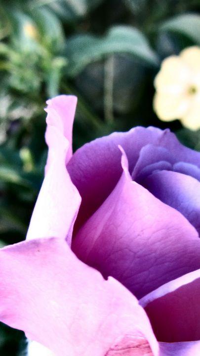 ROSE OF HEALING PEACE - HEALING ART ROXANNE GIBSON