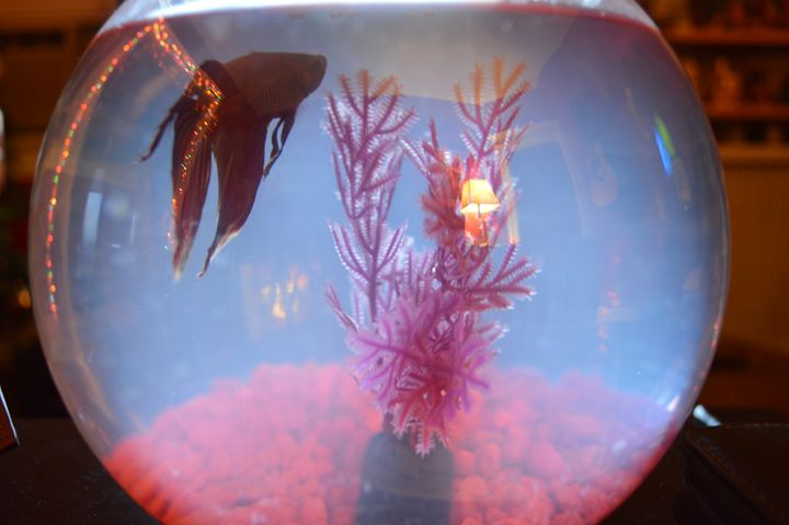 The Fish of Christmas Past - Jenna Marotta's Art & Photography