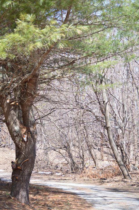 Gypsy Tree - Jenna Marotta's Art & Photography