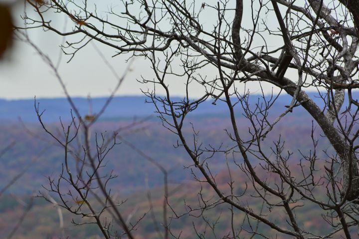 Branches - Mountains of Arkansas