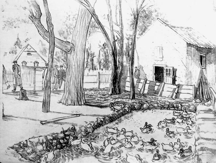 Duck pound- Mare aux canards - Charlie Marco