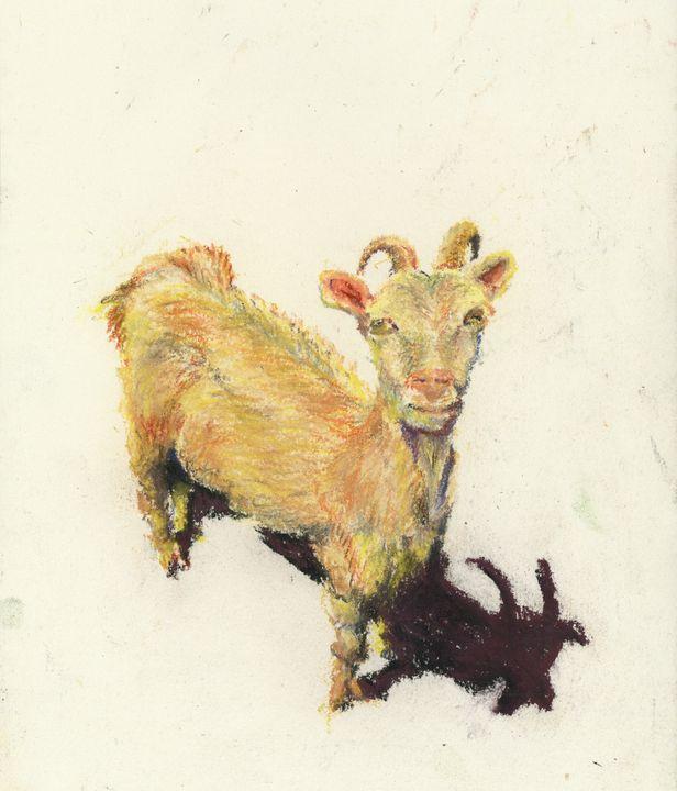 Goat - Maho's Gallery