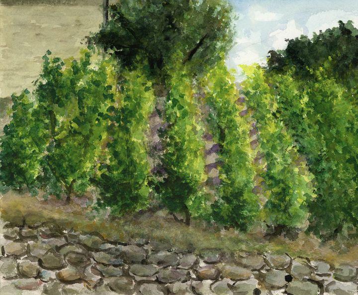 Grape Farm - Maho's Gallery