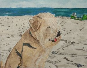 Chester at the Beach