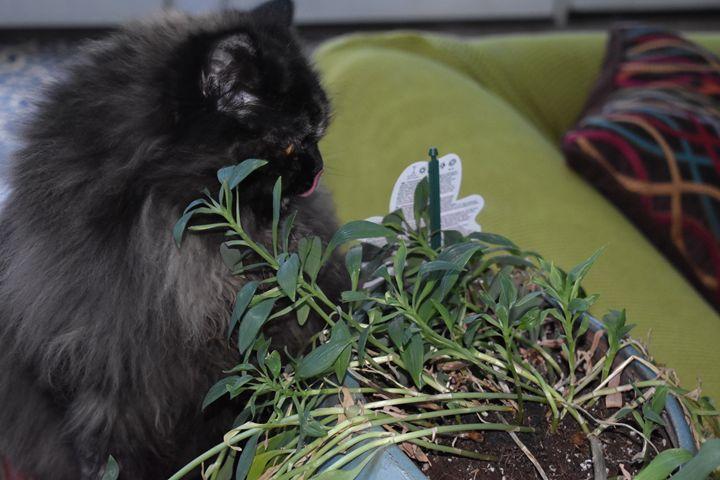 Cat Life - ISPY