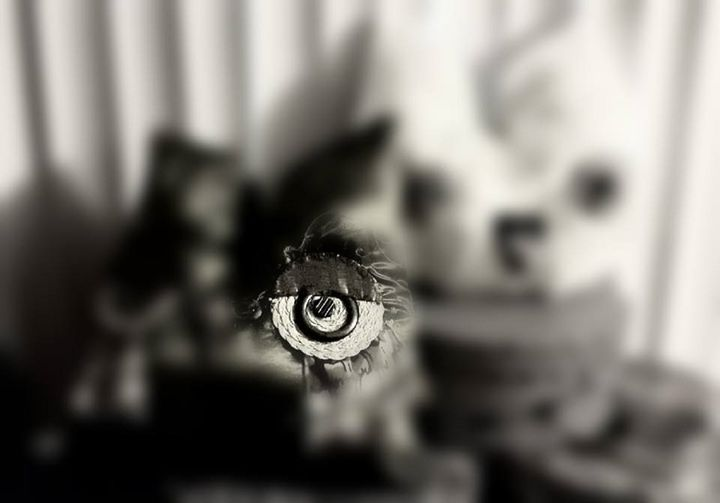 Owl Eyes On You - SaintfaerieCreations