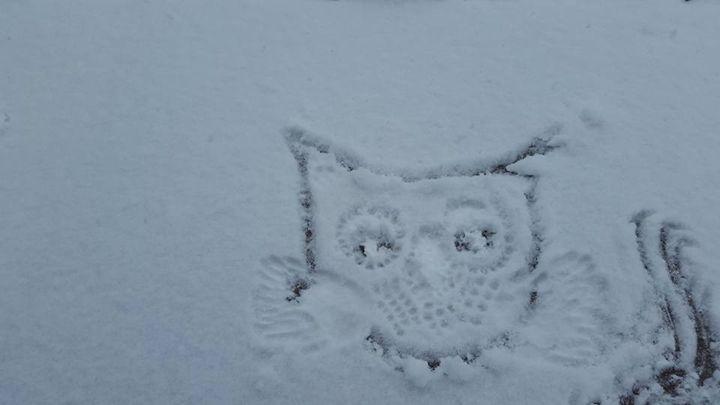 Owlmigo - SaintfaerieCreations