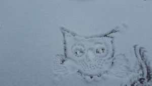 Owlmigo
