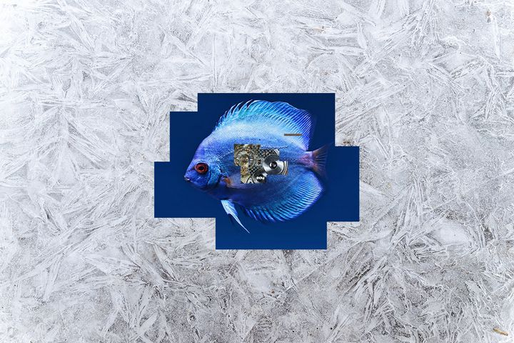 Freeze pond - A.P.Ch.