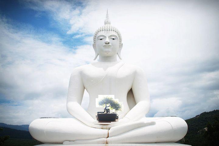 Buddha's tree - A.P.Ch.