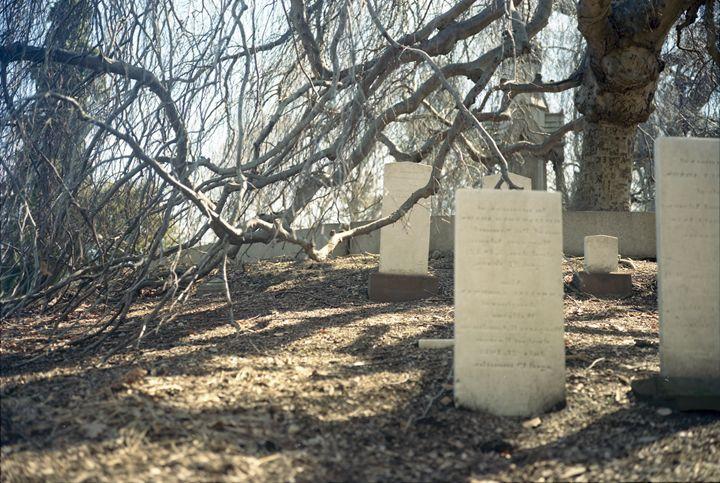 Tangled Graves - K. Manzi