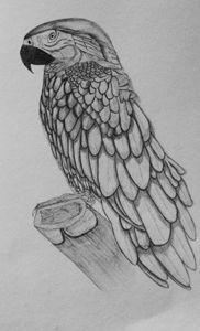 The Calm Parrot