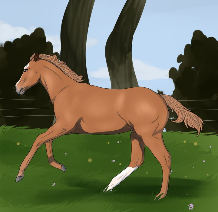 Horse in a field - Witchetka