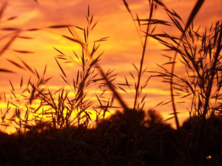 Sunrise through tall grass - Michelle Stern Photography
