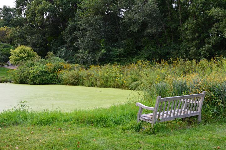 Bench by Green Pond - Michelle Stern Photography