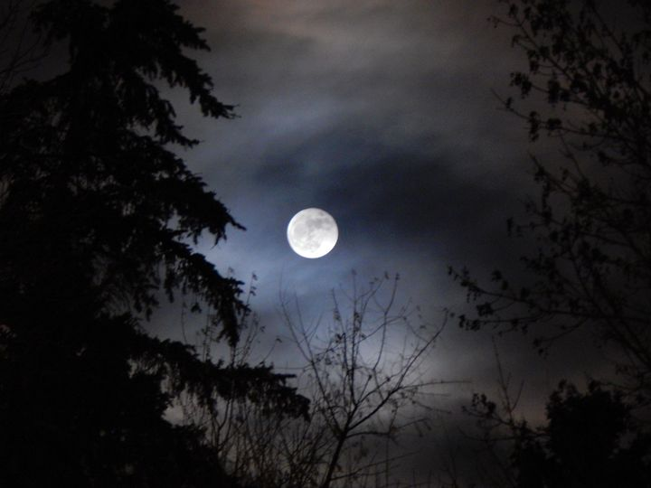 Full Moon with Clouds and Trees - Michelle Stern Photography