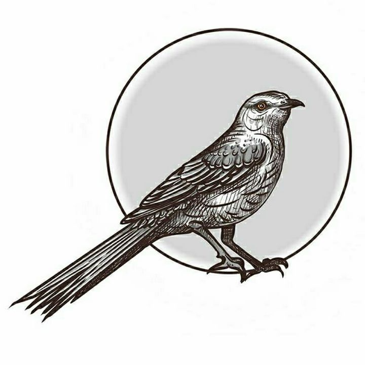Mockingbird - A. P. Illustrations