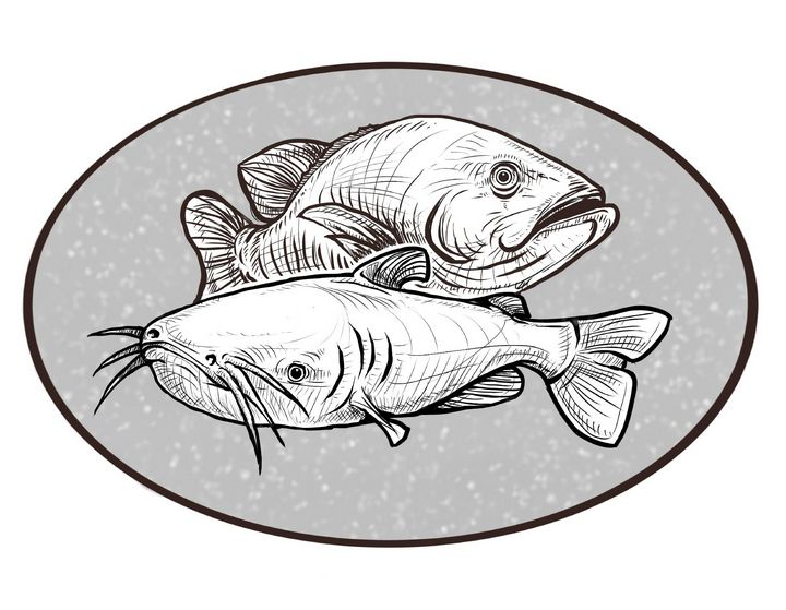 Fish - A. P. Illustrations