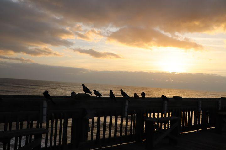 Pigeons on Folly Beach Pier at Dawn - Environmental Manipulations