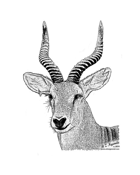 Kob (Thompson's gazelle) - Art Engraved