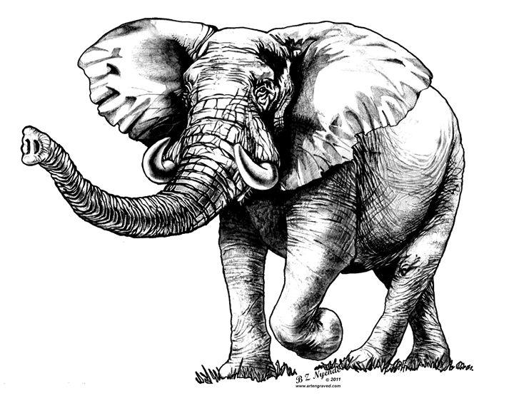 Elephant - Art Engraved