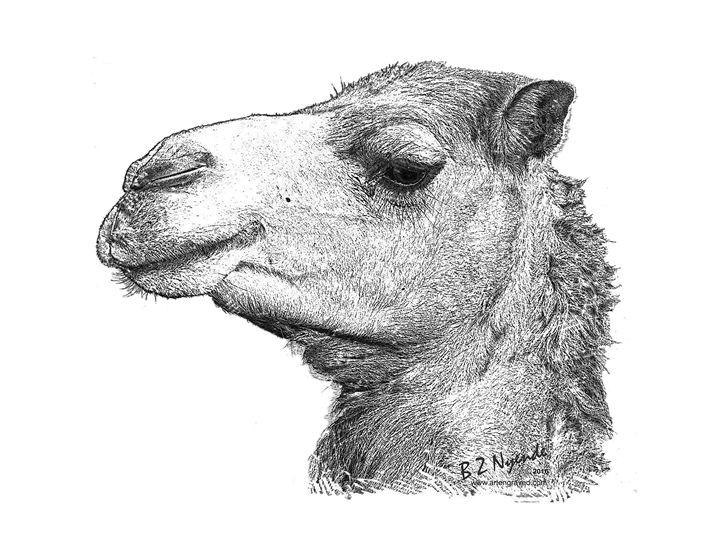 Camel - Art Engraved