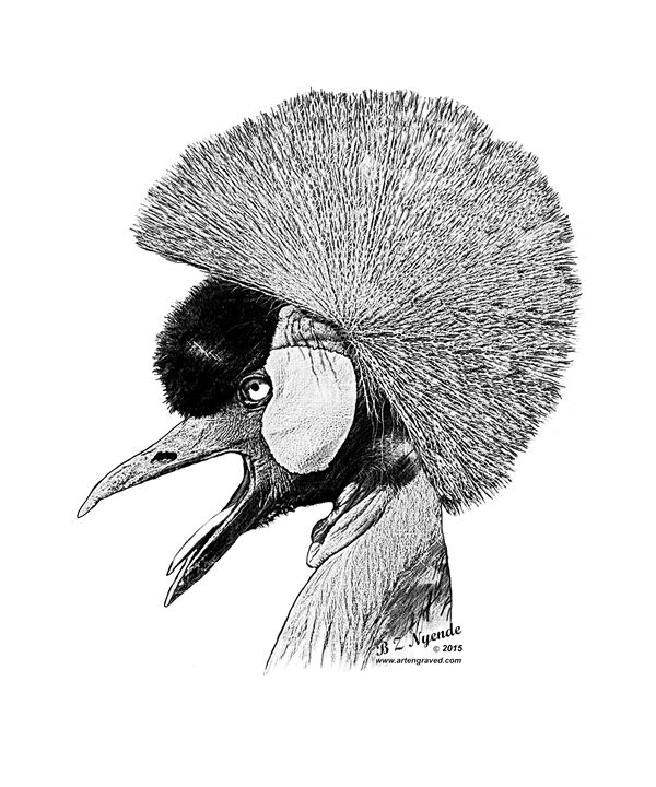 Crested Crane - Art Engraved