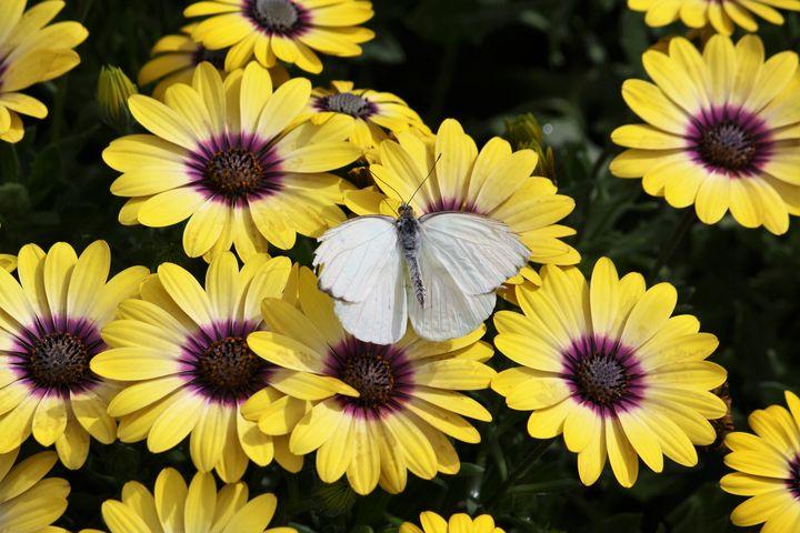 Spring at the Desert Botanical Garde - Sally Mesarosh Photography