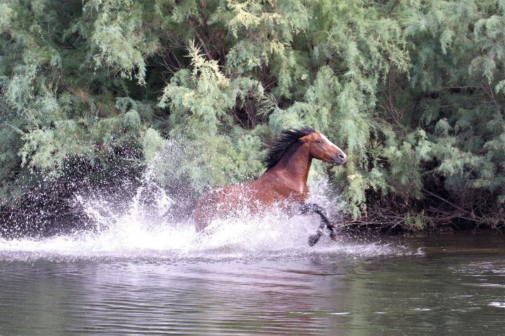 Running Wild Horse - Sally Mesarosh Photography