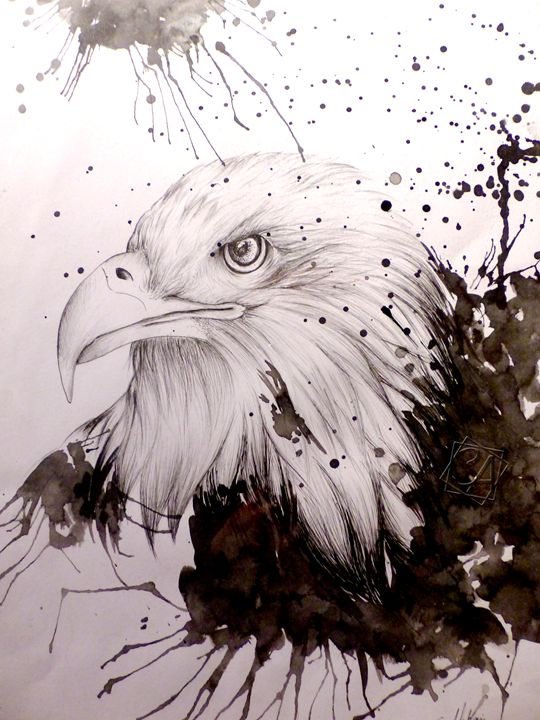 Head Of Eagle - Creation Art Graphic