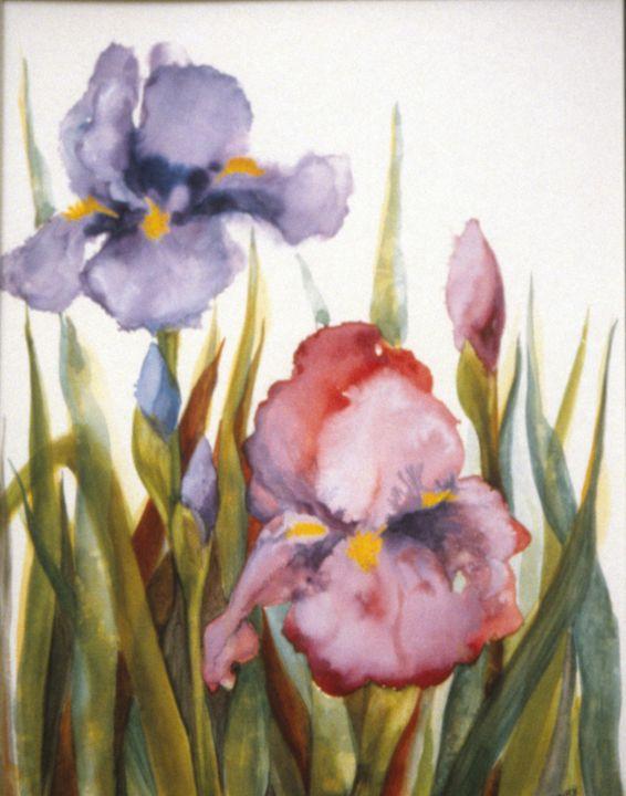 Pink Iris - Sara