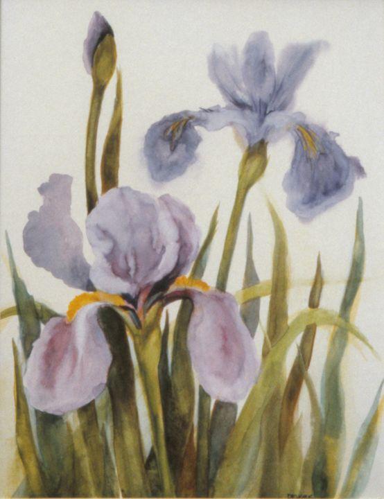 Purple Iris - Sara