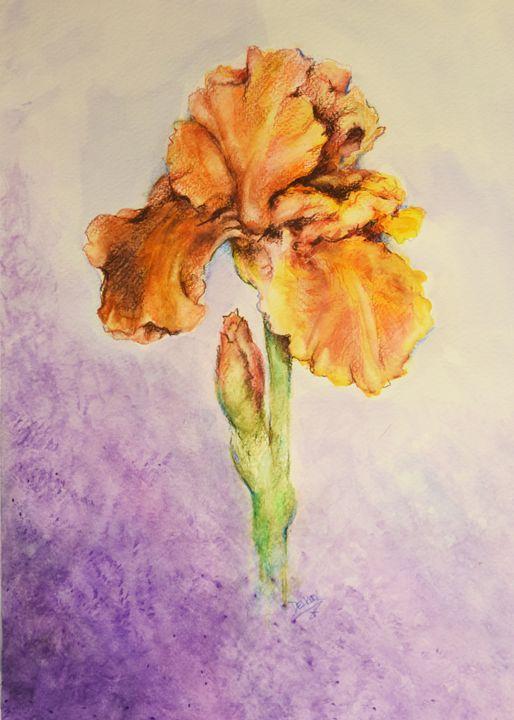 Gold Iris - Sara