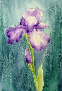New Purple Iris