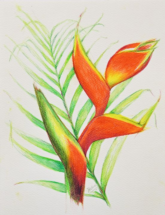 Parrot's Bill Flower 1 - Sara