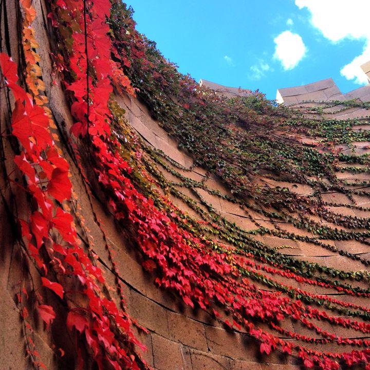 Circular Wall Terrace - jammer66